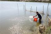 Thua Thiên-Huê : plus de 29 millions de dollars pour la conservation des ressources aquatiques