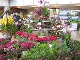 Le Vietnam, lun des premiers exportateurs de fleurs dAsie, selon Nikkei