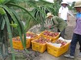 Accélérer lexportation de fruits et légumes vers le marché américain