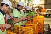 Inauguration de la plus grande usine de transformation de fruits du Sud occidental