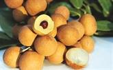 Des longanes de Hung Yên exportés aux États-Unis