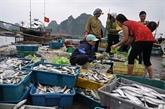 À Quang Tri, les pêcheurs sinistrés reçoient des indemnités avant le Têt