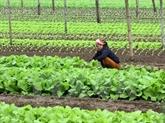 Un groupe néerlandais construira un centre de production de semis de légumes à Hà Nam