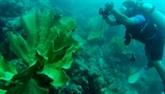 LIndonésie et les États-Unis coopèrent dans la conservation de lhabitat marin