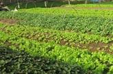 La République de Corée aide Quang Tri à développer lagriculture biologique