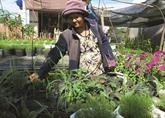 Dông Tháp, terre fertile pour lessor de lagriculture