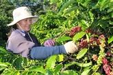 Dak Lak promeut son café produit sous lIG de Buôn Mê Thuôt à linternationale