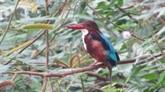 Un projet pour protéger les oiseaux aquatiques rares au Parc national Bên En