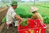 Soc Trang et le Japon renforcent la coopération dans lagriculture bio
