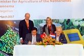 Hô Chi Minh-Ville et les Pays-Bas renforcent leur coopération dans lagriculture
