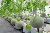 Booster la coopération Vietnam-Israël dans les start-ups et l'agriculture high-tech