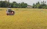 Production de riz : le Vietnam dans le top 5 mondial