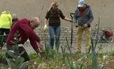 Planter des poireaux sur les trottoirs parisiens, cest possible