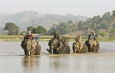 Les petits plaisirs d'une balade à dos d'éléphant à Buôn Dôn
