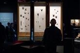 Musée : araignées, serpents ou flèches au curare pour raconter les poisons