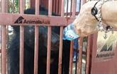 Animals Asia recueille deux nouveaux ours