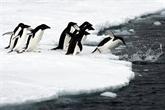 Manchots : les chercheurs appellent à mieux protéger lAntarctique