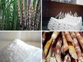 Lindustrie sucrière cherche à mieux sintégrer dans la région