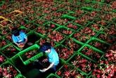 Un milliard de dollars dexportations de fruits et légumes en quatre mois