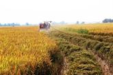 Lagriculture, élément vital pour une croissance durable