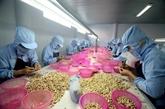 Les États-Unis, premier consommateur de noix de cajou du Vietnam