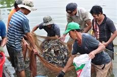 Le Vietnam invite lAustralie à lever lembargo sur les crevettes