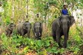 Encore sur les éléphants