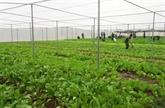 Au Vietnam, l'agriculture cultive les nouvelles technologies