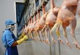 Le Vietnam exportera pour la première fois de la viande de poulet au Japon