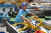 Formosa : la qualité de l'environnement maritime est