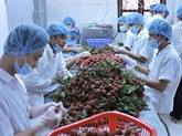 Promouvoir la coopération économique entre le Vietnam, le Guangdong et Hongkong