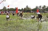 La fête de descente aux champs à Quang Ninh
