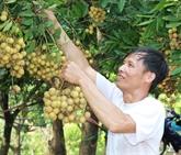 Les fruits frais en tête des exportations vietnamiennes vers la Chine