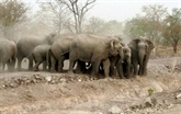 Des efforts conjoints pour protéger les derniers éléphants sauvages au Vietnam