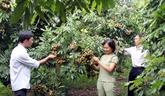 Bac Giang investit 1.500 milliards de dôngs dans lagriculture high-tech