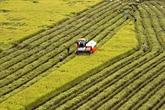 Appel à l'investissement pour sept projets agricoles et d'infrastructures à Hâu Giang