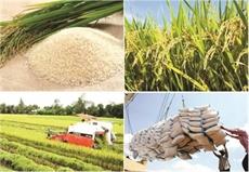 Delta du Mékong : pour développer une agriculture intelligente et durable