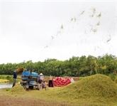L'australien Sunrice veut se renforcer dans le riz à Cân Tho