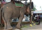 Création d'une zone de préservation des éléphants à Quang Nam