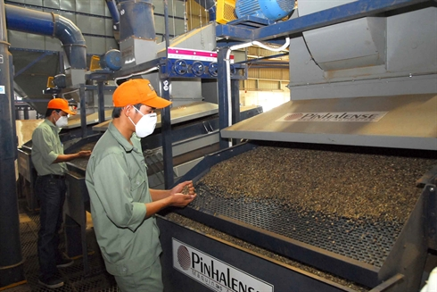 Une chaîne de transformation de café. Photo: Hông Ky/VNA/CVN