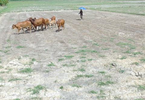 Le changement climatique entraîne des épisodes de sécheresse qui sont de plus en plus graves dans la province de Trà Vinh (Sud).  Photo : Nguyên Ly/VNA/CVN