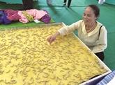 Les vers à soie tisserands de Mme Thuân