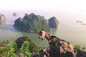 La montagne Bài Tho, belvédère de la ville de Ha Long