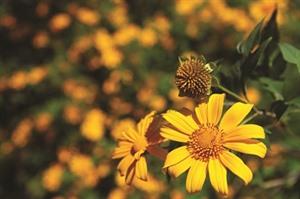 Il est temps d'aller admirer les fleurs au Nord-Ouest