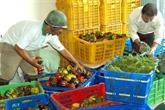 Belles perspectives pour les exportations de fruits et légumes