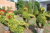 Des plantes en forme de coq