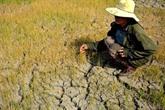 Séminaire sur des solutions au changement climatique dans le delta du Mékong