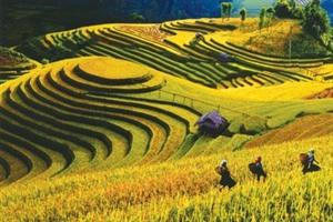 La Semaine touristique des rizières en terrasses de Mu Cang Chai prévue en septembre