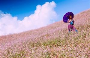 Hà Giang : bientôt la 3e édition de la Fête des fleurs de sarrasin