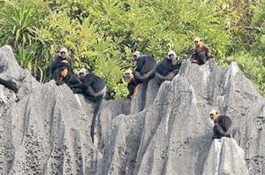 Cát Bà, un sanctuaire des espèces menacées d'extinction